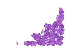 Het frame van de de bloemflox van de hoek. Royalty-vrije Stock Foto's