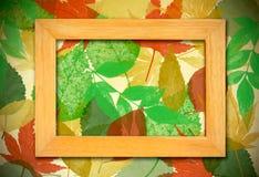 Het frame van de foto over bladerenachtergrond royalty-vrije stock fotografie