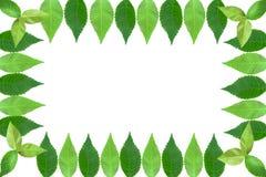 Het frame van de foto van bladeren Stock Foto's