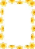 Het frame van de gele narcis stock fotografie