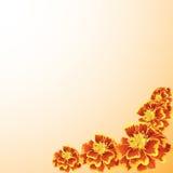 Het frame van de goudsbloem Royalty-vrije Stock Fotografie