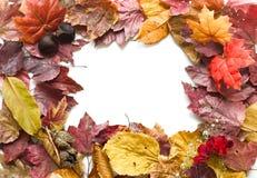 Het frame van de herfst Royalty-vrije Stock Foto's