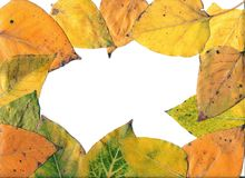 Het frame van de herfst. Royalty-vrije Stock Fotografie