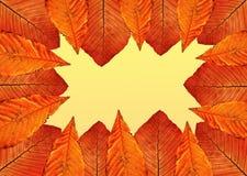 Het frame van de herfst. Stock Foto's