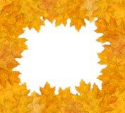 Het frame van de herfst Stock Foto