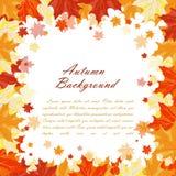 Het frame van de herfst Mooie echte bladeren die op wit worden geïsoleerdg Stock Afbeelding