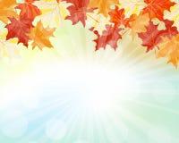 Het frame van de herfst Mooie echte bladeren die op wit worden geïsoleerdg Royalty-vrije Stock Foto