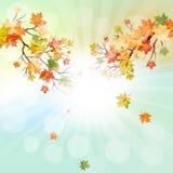 Het frame van de herfst Mooie echte bladeren die op wit worden geïsoleerdg Stock Foto