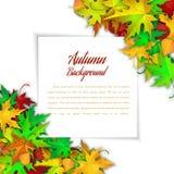 Het frame van de herfst Mooie echte bladeren die op wit worden geïsoleerdg Stock Fotografie