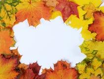 Het frame van de herfst Mooie echte bladeren die op wit worden geïsoleerdg Royalty-vrije Stock Foto's