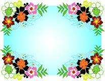 Het Frame van de hibiscus Stock Afbeeldingen