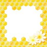 Het Frame van de honingraat met Bloem Royalty-vrije Stock Afbeelding