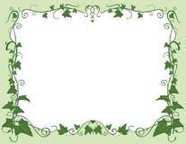 Het frame van de klimop Stock Afbeelding