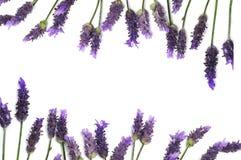 Het frame van de lavendel Stock Afbeeldingen