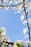 Het frame van de lente Stock Afbeeldingen