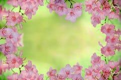 Het Frame van de lente Stock Foto's