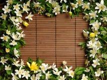 Het Frame van de lente Stock Afbeelding
