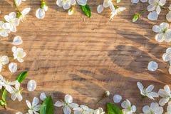 Het frame van de lente met kersenbloemen Royalty-vrije Stock Afbeelding