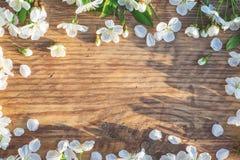 Het frame van de lente met kersenbloemen Royalty-vrije Stock Foto's