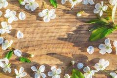 Het frame van de lente met kersenbloemen Stock Fotografie