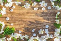 Het frame van de lente met kersenbloemen Royalty-vrije Stock Fotografie