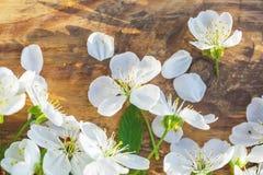 Het frame van de lente met kersenbloemen Royalty-vrije Stock Afbeeldingen