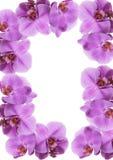 Het frame van de orchidee Royalty-vrije Stock Foto