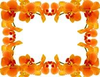 Het frame van de orchidee Stock Afbeeldingen