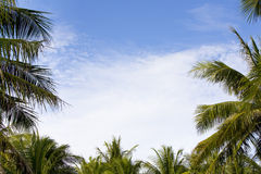 Het frame van de palm Stock Afbeeldingen