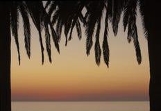 Het Frame van de palm Royalty-vrije Stock Afbeeldingen