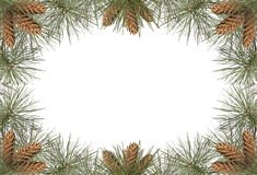 Het Frame van de pijnboom Royalty-vrije Stock Afbeelding