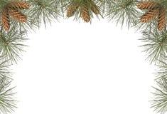 Het Frame van de pijnboom Royalty-vrije Stock Foto's