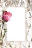 Het Frame van de tulp royalty-vrije stock foto