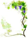 Het frame van de wijngaard vector illustratie