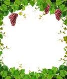 Het frame van de wijnstok met wijndruiven Royalty-vrije Stock Afbeeldingen