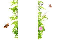 Het frame van de zomer met groene bladeren, bloemen en insecten Stock Afbeeldingen