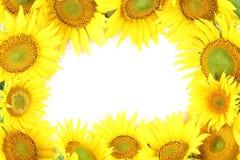 Het frame van de zonnebloem Stock Afbeelding