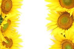 Het frame van de zonnebloem Stock Foto