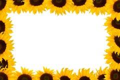 Het frame van de zonnebloem Royalty-vrije Stock Foto's