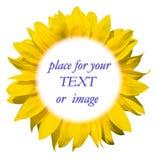 Het frame van de zonnebloem voor uw tekst Stock Afbeeldingen
