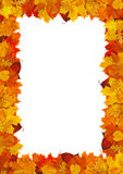 Het frame van het blad Royalty-vrije Stock Afbeelding