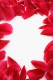 Het frame van het bloemblaadje Stock Fotografie