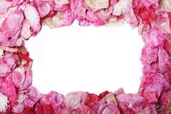 Het frame van het bloemblaadje Stock Foto's