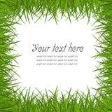 Het frame van het gras Royalty-vrije Stock Foto