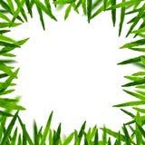 Het frame van het gras Stock Foto's