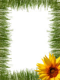 Het frame van het gras Royalty-vrije Stock Fotografie
