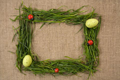 Het frame van het gras met eieren en lieveheersbeestjes Stock Foto's