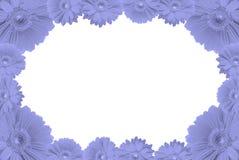 Het frame van hoge resolutiegerbera stock afbeeldingen