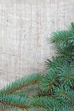 Het frame van Kerstmis met tak Stock Foto