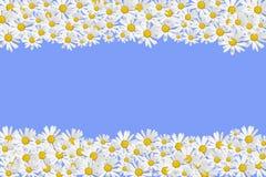 Het frame van madeliefjes Royalty-vrije Stock Afbeelding